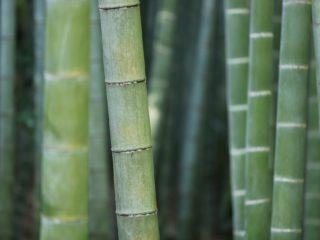 Sanex lance une nouvelle gamme de déodorants Natur Protect à la poudre de bambou d'origine naturelle
