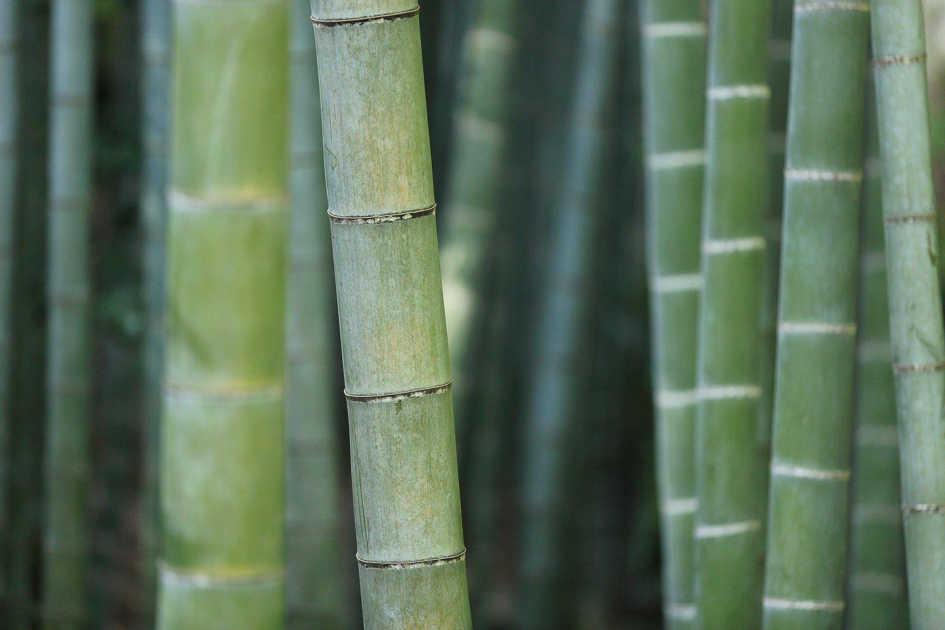 poudre naturelle de bambou