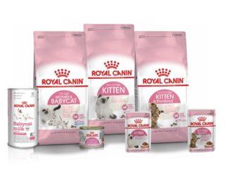 Construire une bonne relation avec son chaton : Les conseils de Royal Canin pour adopter les bons réflexes !